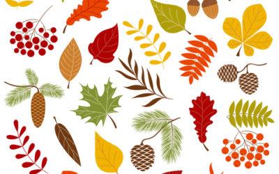 [ENTREPRENEURSHIP & Seasonal Tips] booster sa créativité et son énergie en automne : nos 5 tips yin & yang